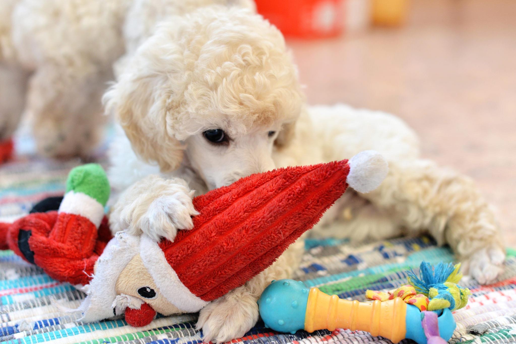 Как быть, если ребенок просит собаку?