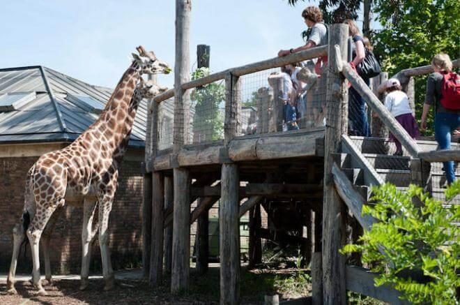 Зоопарк (Лондон)